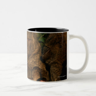 Group of olive baboons (Papio anubis) watching, Two-Tone Coffee Mug