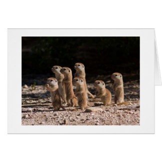 GROUP OF PRARIE DOGS ARE SAYING HAPPY BIRTHDAY CARD