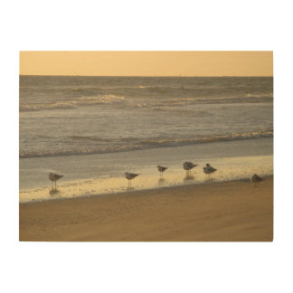 Group of Tern Bird Gulls Ocean Beach Sunrise Wood Print