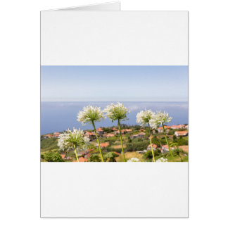 Group of white agapanthus near village and sea card