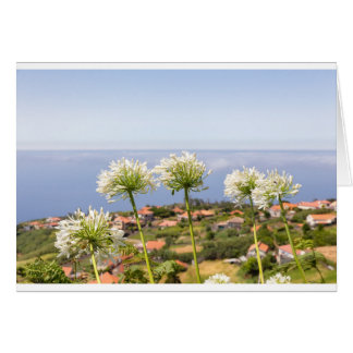 Group of white agapanthus near village and sea greeting card