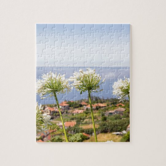 Group of white agapanthus near village and sea jigsaw puzzle
