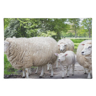 Group of white sheep and lamb on road in nature placemats