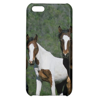 Group of Wild Mustang Horses Case For iPhone 5C