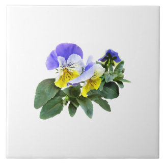 Group Of Yellow And Purple Pansies Ceramic Tile