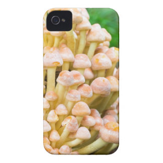 Group orange yellow mushrooms in fall forest iPhone 4 Case-Mate cases