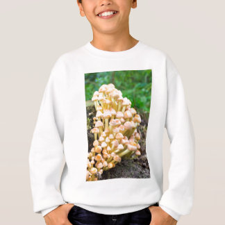Group orange yellow mushrooms in fall forest sweatshirt