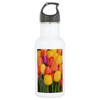 Groupe coloré de tulipes de ressort