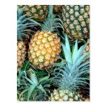 Groupe d'ananas carte postale