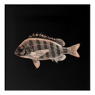 Grouper Fish Sea Ocean Black Rose Gold Metallic Acrylic Print