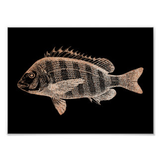Grouper Fish Sea Ocean Black Rose Gold  Metallic Poster