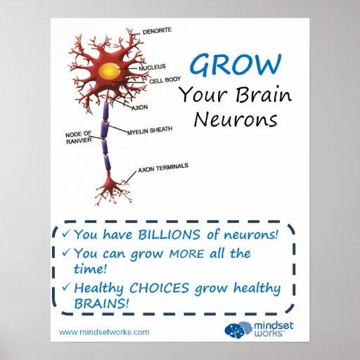 Grow Your Brain Neurons Brainology® Poster
