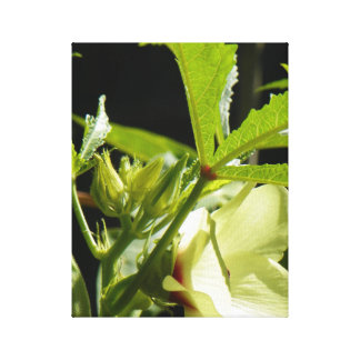 GROWING OKRA CANVAS PRINT
