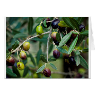 Growing Olives Card