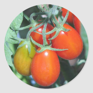 Growing Tomatoe's Classic Round Sticker