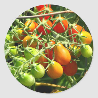 Growing Tomatoe's Round Sticker