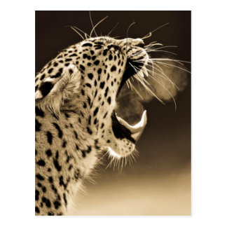 Growling Leopard Postcard