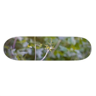 Growth and Transformation Skate Decks