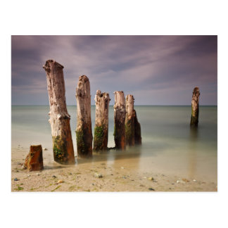 Groynes on shore of the Baltic Sea Postcard