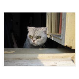 Grumpy Cat 2.0 Postcard