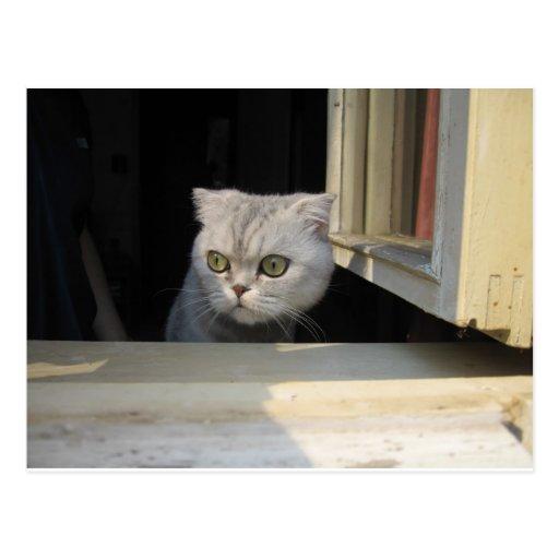 Grumpy Cat 2.0 Postcards