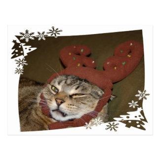 Grumpy Cat Christmas Postcard