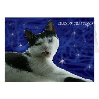grumpy cat seasons greetings card