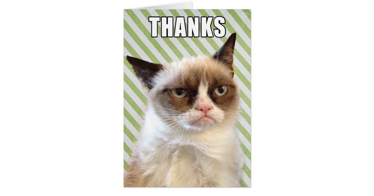 Business Cat Meme Birthday