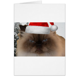 Grumpy Christmas Cat Card