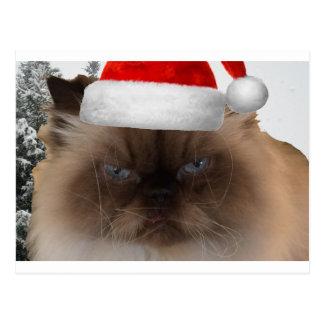 Grumpy Christmas Cat Postcard