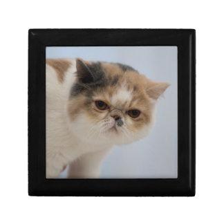 Grumpy Face Cat Gift Box