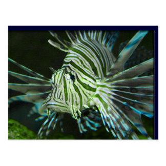 Grumpy Fish Postcard