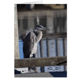 Grumpy Great Blue Heron Greeting Card