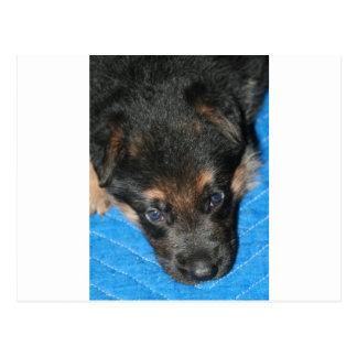 "GSD Puppy ""Sleepy Diesel"" Postcard"