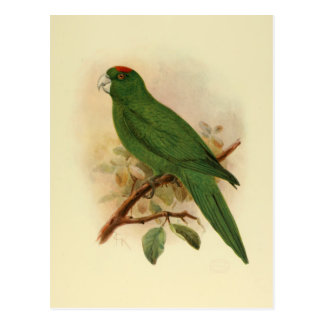 Guadeloupe Parakeet Extinct 1908 Postcard
