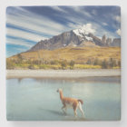 Guanaco crossing the river in Torres del Paine Stone Coaster
