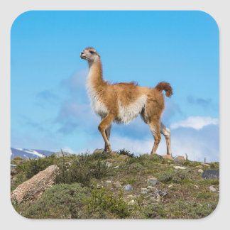 Guanaco Square Sticker