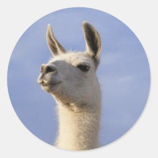 Guard Llama Round Sticker