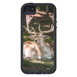 guard of cellular photograph stag under wood iPhone 5 covers