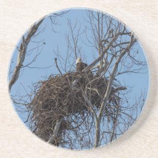 Guarding Eagle Coaster