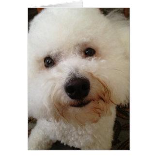 """Gucci"" - a Bichon Frise Pup Card"