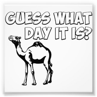 Guess What Day it Is? Hump Day Camel Photo Print