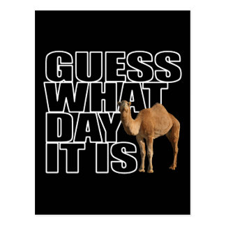 Guess What Day It Is Hump Day Camel Postcard
