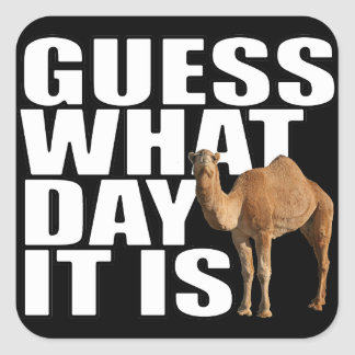 Guess What Day It Is Hump Day Camel Stickers
