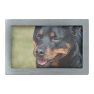 Guileless Rottweiler Belt Buckles