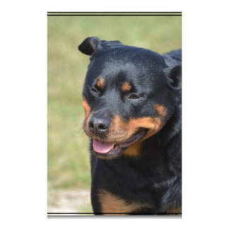 Guileless Rottweiler Customized Stationery