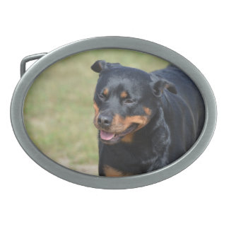 Guileless Rottweiler Oval Belt Buckle