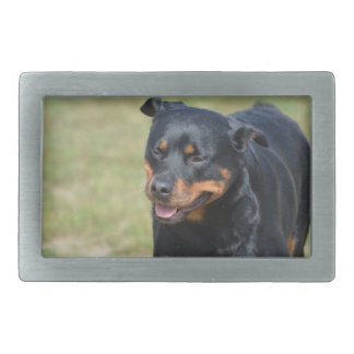 Guileless Rottweiler Rectangular Belt Buckles