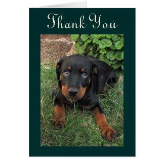Guilty Rottweiler Puppy Thank You Card