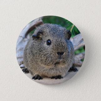 Guinea Pig 2 Inch Round Button